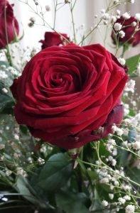 Valentinstag, ein Tag wie jeder Tag - SIMPLYLOVELYCHAOS